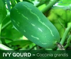 Scarlet gourd